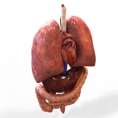 3D Human Internal Organ